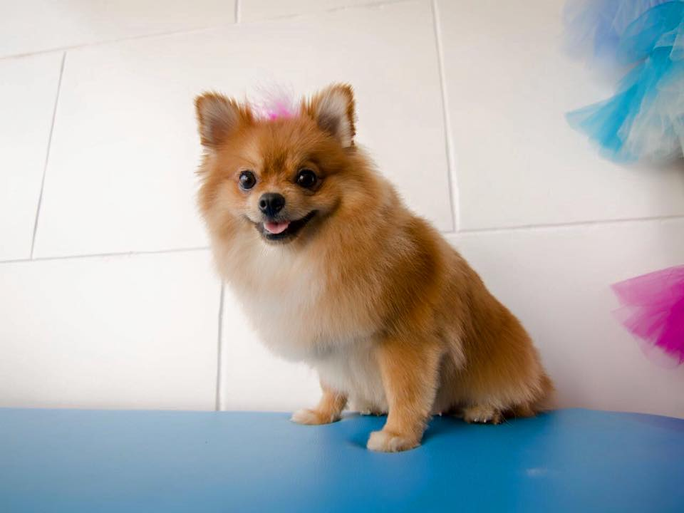 Pom- Services Delivered at pawsome pets guyana