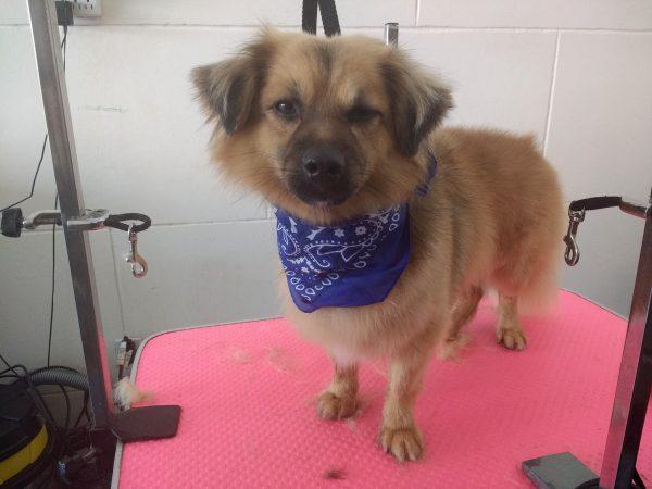 Dog grooming at pawsome pets guyana