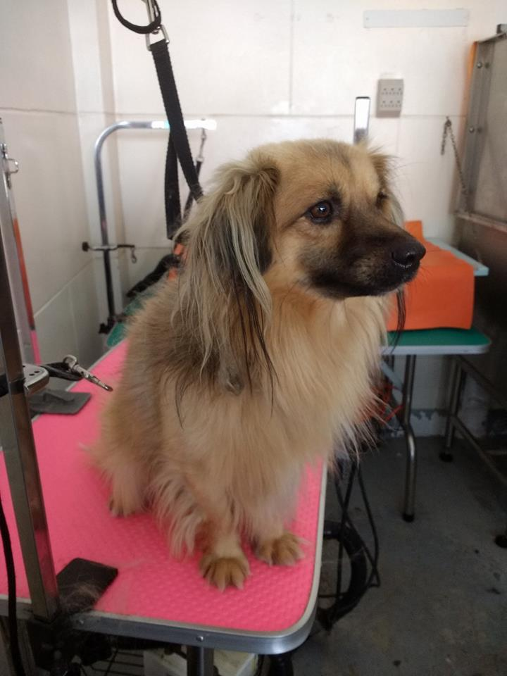 Dog being groomed at Pawsome Pets Guyana