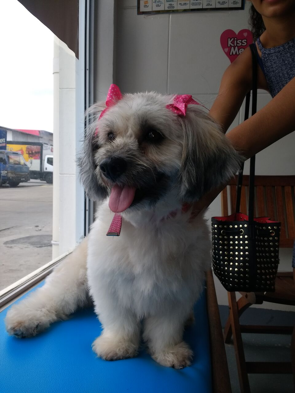 Dog with pink bows Post Grooming, reviews and services at Pawsome Pets Guyana