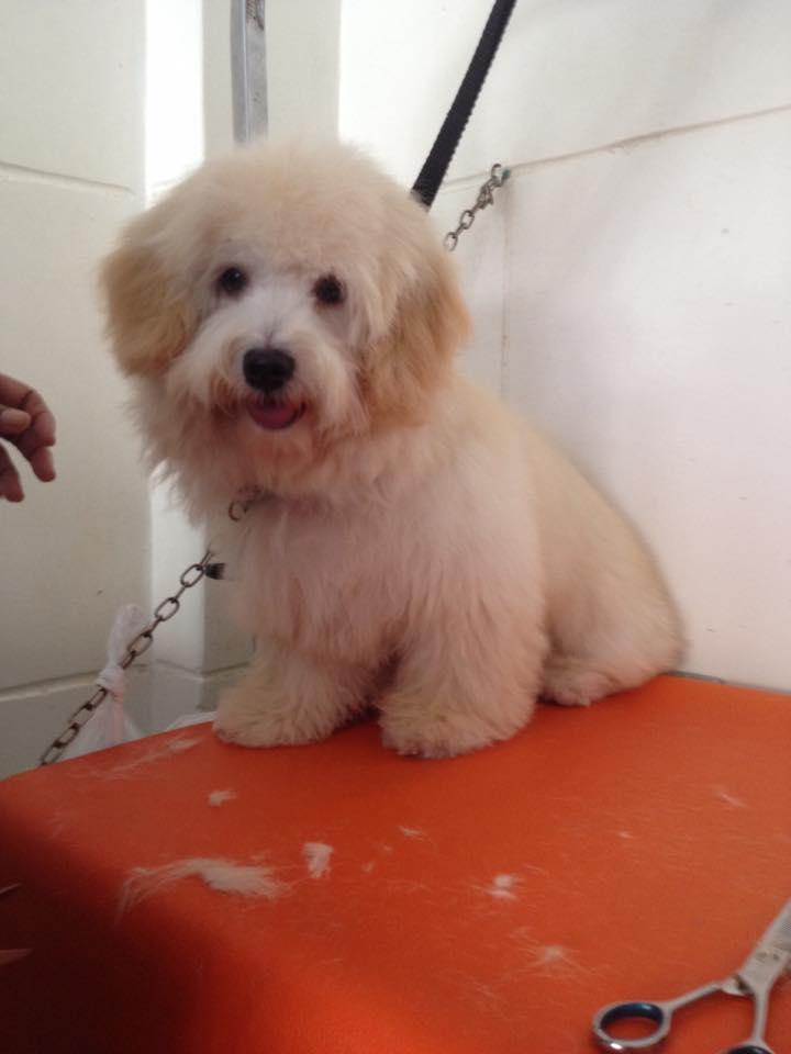 Dog Grooming - Fluffy