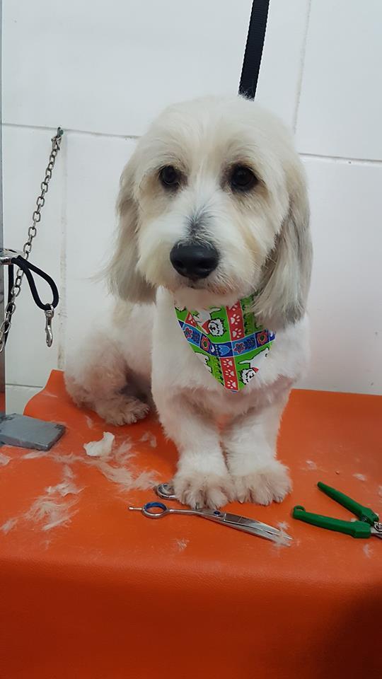 Dog at Pawsome Pets Guyana