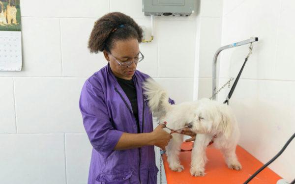 Luana Pierre Grooming at Pawsome Pets Guyana