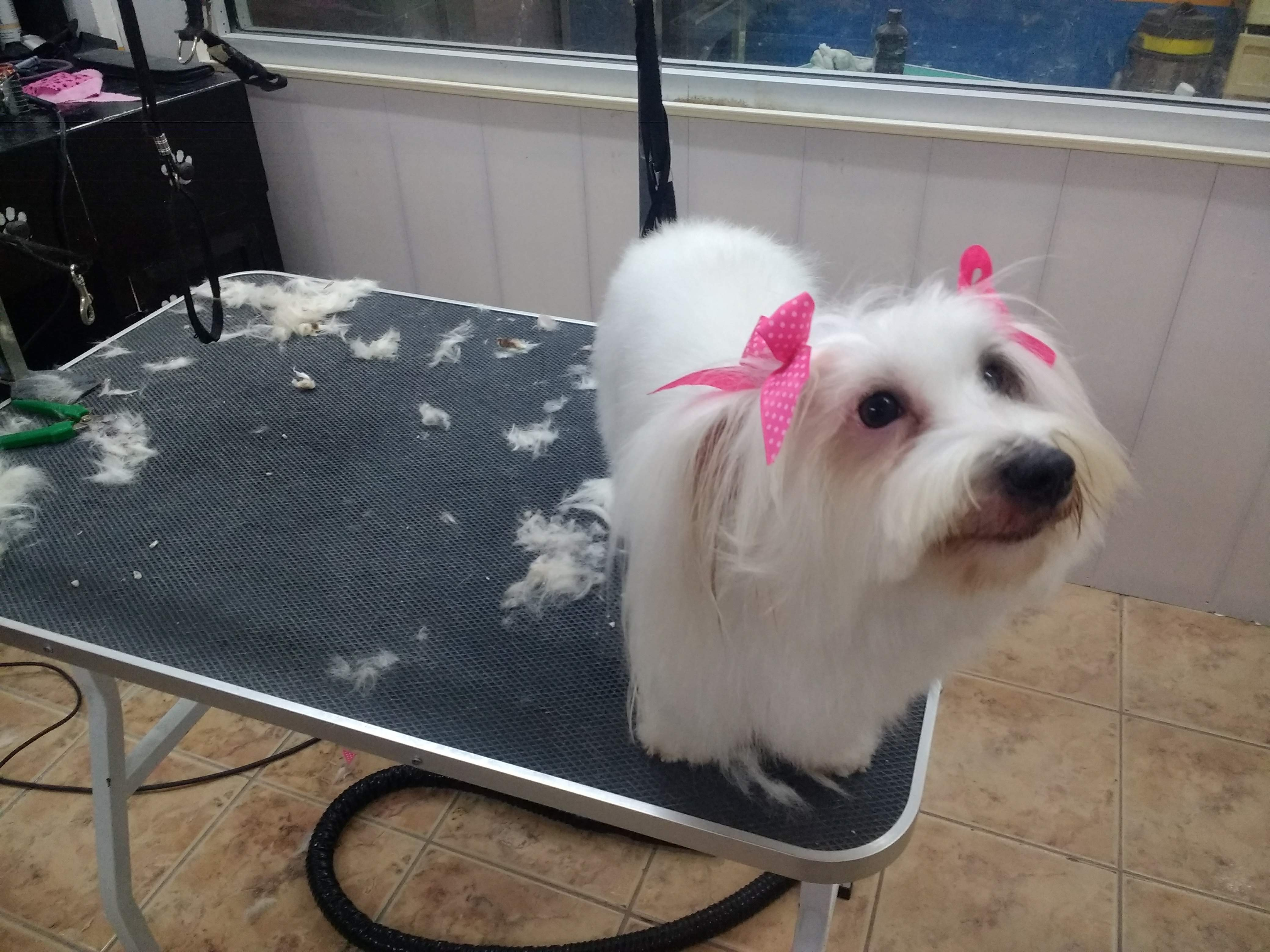 Dog post grooming, reviews and services at Pawsome Pets Guyana