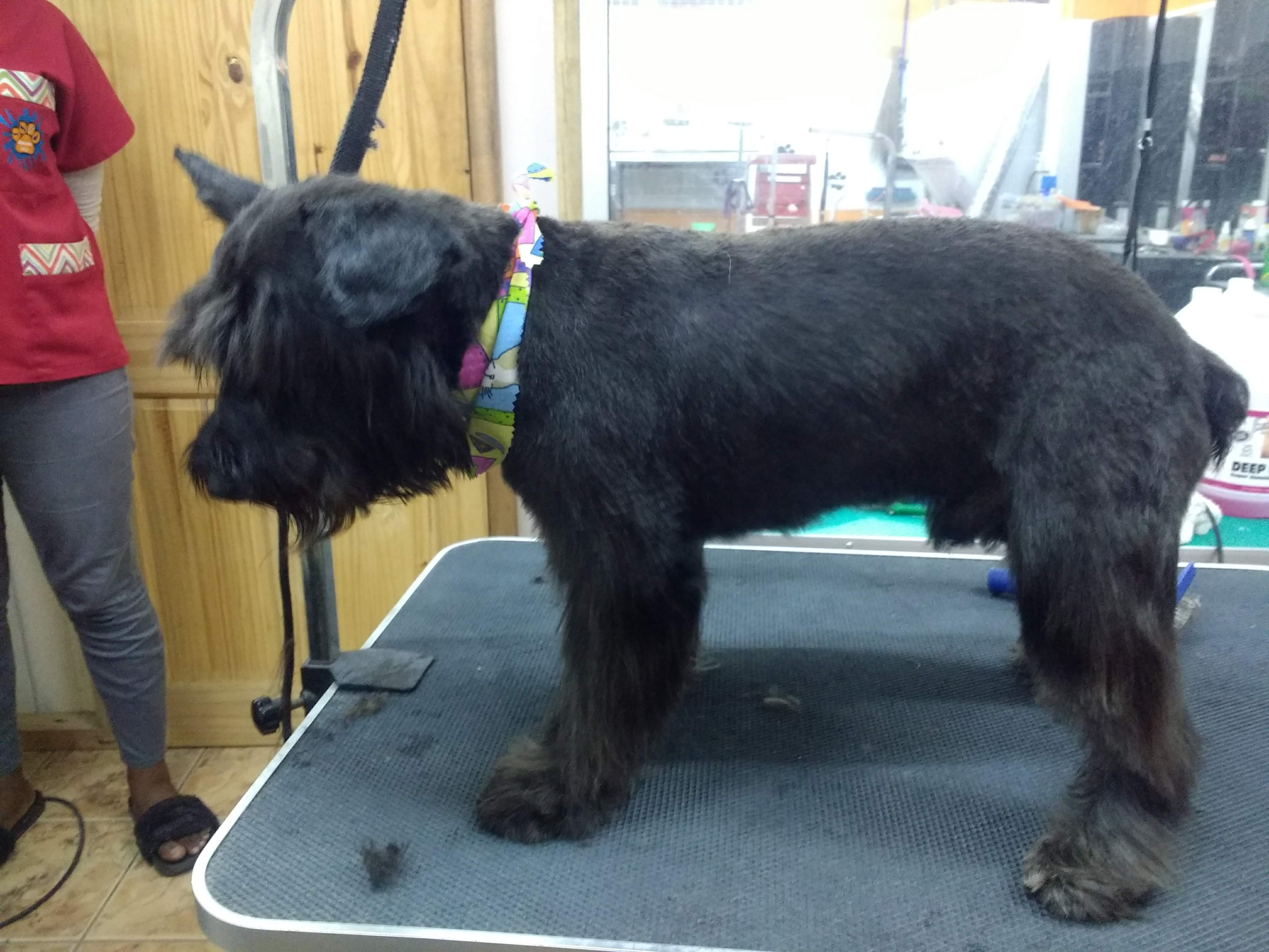 Dog Grooming, reviews and services at Pawsome Pets Guyana