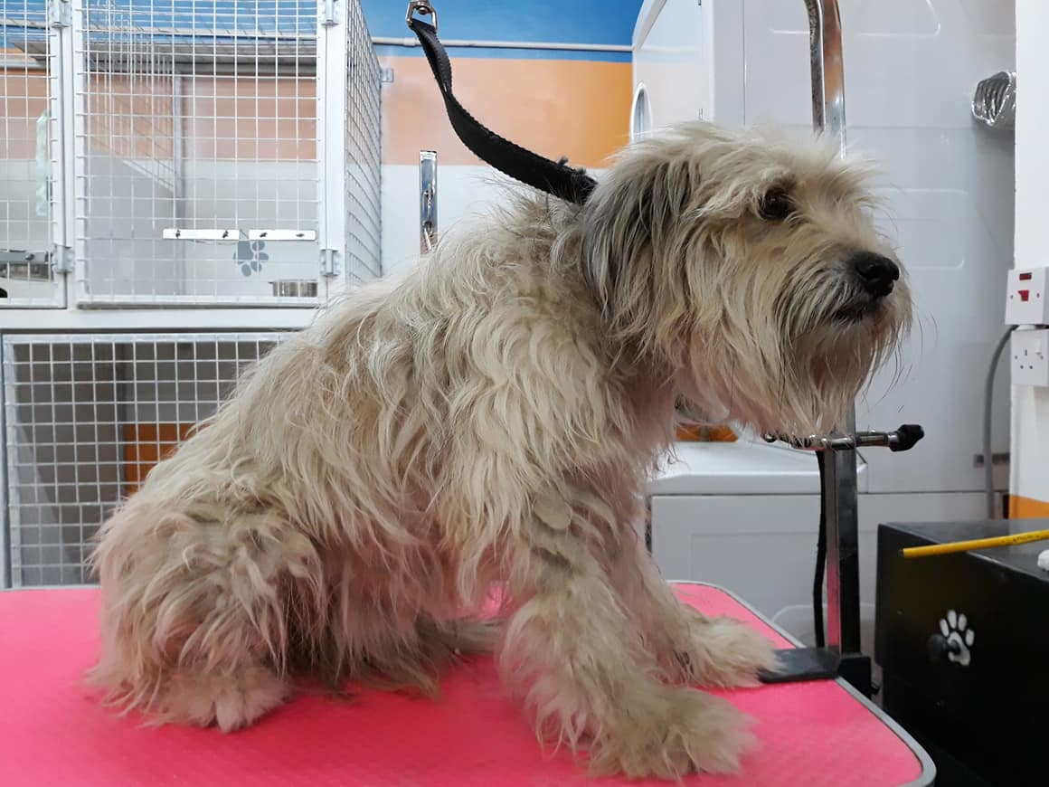 Post Grooming at Pawsome Pets GY