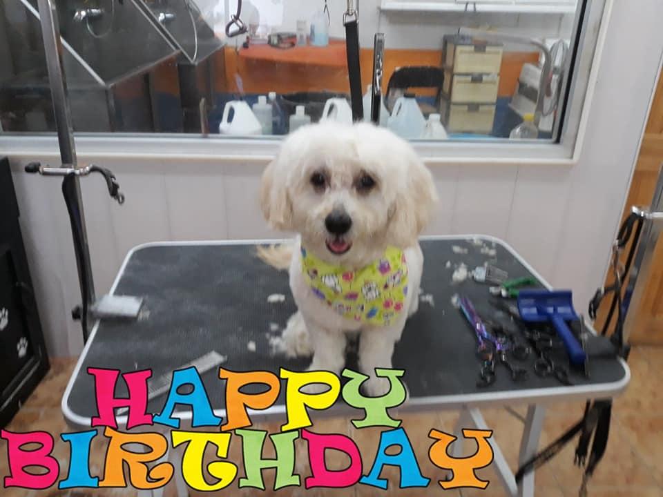 Happy Birthday Charlie - Pawsome Pets Guyana
